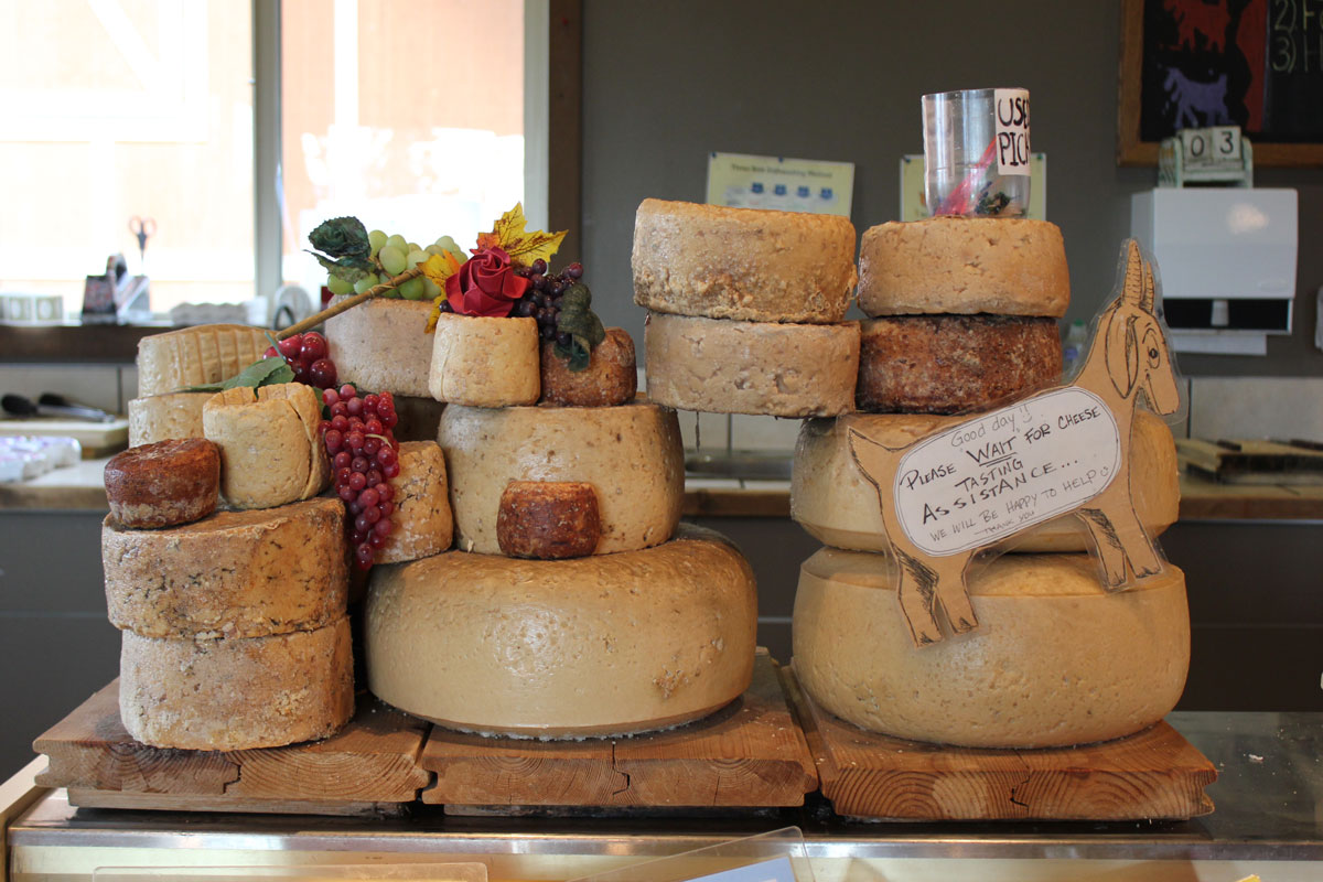 goat-cheese-farm-v2