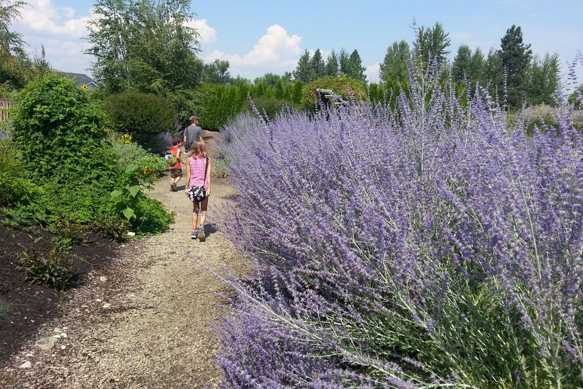 Lavender and Herb Farm