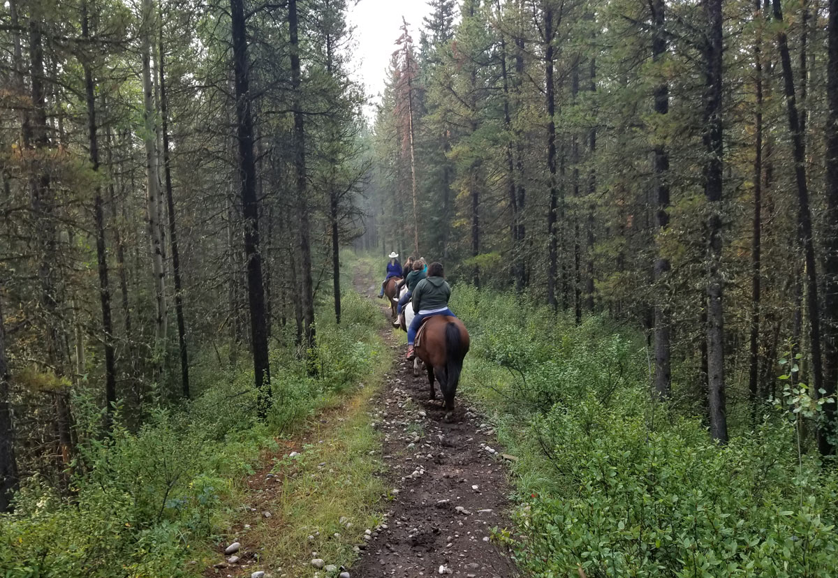 Lush forest views during our Boundary Ranch Trail ride